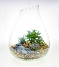 Large Glass Bell Terrarium Large Glass Terrarium, Terrarium Kits, Curved Glass, Order Up, Recycled Glass, Plant Care, Planting Succulents, Compost, Roots