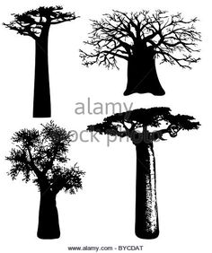 baobabs - African trees - Stock Image