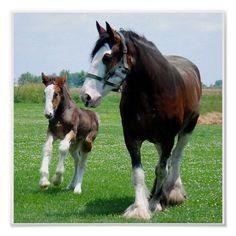 Big Horses, Pretty Horses, Horse Love, Beautiful Horses, Animals Beautiful, Clydesdale Horses, Breyer Horses, Draft Horses, Friesian