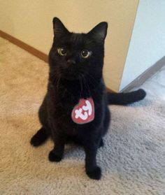 The rarest Beanie Baby of them all!Share This on Facebook?Image via Tumblr - Mom.me