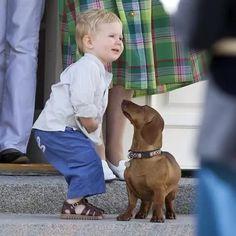 Cute Puppies, Dogs And Puppies, Prince Christian Of Denmark, Baby Animals, Cute Animals, Mini Dachshund, Daschund, Weenie Dogs, Doggies