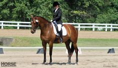 These exercises will help you achieve a square halt in your next dressage test.