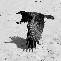 Bird & Shadow