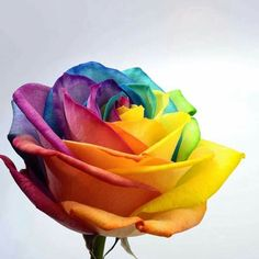 #colourful #rose #likemyfeelings ❤