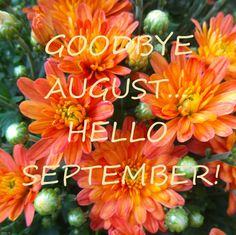 Goodbye August...Hello September! {orange mums} Hello September Quotes, Welcome September, Happy September, New Month Greetings, Cute Minion Quotes, Calligraphy Hello, September Pictures, September Wallpaper, Halloween Quotes