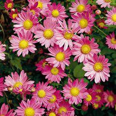 October Gardening & Planting Tips