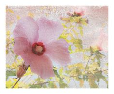 Floral Art Print  Botanical Art Print Flower Photo by DUEALBERI, $25.00