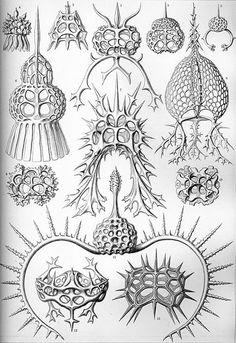 Plates From Ernst Haeckels Book Kunstformen Der Natur Artforms Of Nature