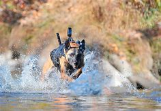 """A military working dog outfitted with specialized gear of its own is seen in this undated handout image released by the Canadian company """"K9 Storm Inc."""" which manufactures a range of specialized gear that includes high-tech canine flak jackets and tactical body armor used by the U.S. military and other nations"""