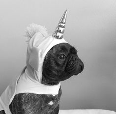 The Elusive Frenchicorn, French Bulldog Puppy in a Unicorn Froodie,イヌ 犬可愛い画像まとめ http://ift.tt/252BGhw