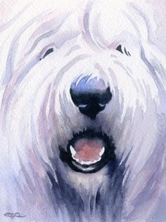 Old English Sheepdog Art Print by Watercolor Artist DJ Rogers English Dogs, Old English Sheepdog, Art Ancien, Bearded Collie, Watercolor Animals, Watercolor Painting, Dog Signs, Dog Portraits, Dog Art