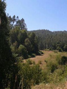 Bosque cerca Conce