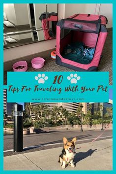 10 Tips For Traveling With Pets Solo Travel Tips, Packing Tips For Travel, Travel Advice, Budget Travel, Packing Lists, Travel Hacks, Travel Essentials, Travel Info, Travel Guides