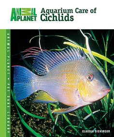 Cichlids are popular and attractive fish that require specific care and…