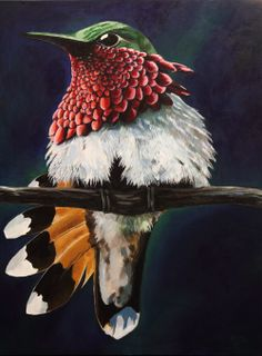 Wine Throated Hummingbird Acrylic Jessi Sparkman