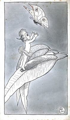 Book Illustrations - May Gibbs Illustrators, Sketches, Baby Tattoos, Illustration, Botanical Illustration, Drawings, Australian Art, Art, Drawing Inspiration