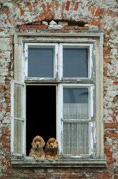 Dogs in window in Hungary by LightShaper (jwillis), via Flickr