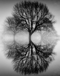 Ansel Adams tree ~                                                       …