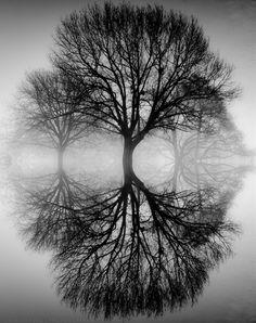 Ansel Adams tree  Love Ansel Adam!