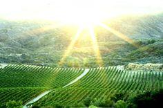 South Coast Winery - Temecula.
