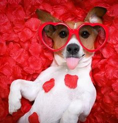 9 Reasons Your Dog Should Be Your Valentine [VIDEO - Süße Hundebilder - Sweet Dogs! Puppy Pictures, Dog Photos, Funny Photos, Pet Shop, Funny Dogs, Cute Dogs, Funny Memes, Sweet Dogs, Valentine Picture