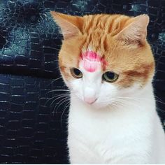 😄❤️ 💋 ⠀ ⠀ ⠀ Do you kiss 💋 you cat or dog? ⠀ 📷 DM for Credit or Removal kitty cats kitten kittens kedi katze แมว 猫 ねこ ネコ 貓 고양이 Кот котэ котик кошка chat neko gato gatto meow kawaii nature pet animal instacat instapet mycat catlover Cute Kittens, Cats And Kittens, Kitty Cats, Funny Cat Videos, Funny Cats, Sweet Pictures, Animals And Pets, Cute Animals, Animals Sea