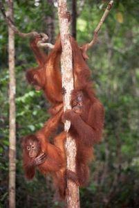 Preschool Activities About Jungle Animals thumbnail