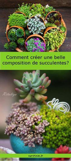 10 idées de compositions de succulentes, plantes grasses et cactus. Avec des liens vers des tutos.