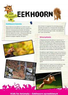 Kids For Animals - Spreekbeurten Forest Theme, Close Reading, Autumn Activities, Fauna, Pre School, Curriculum, Science, Teaching, Squirrel