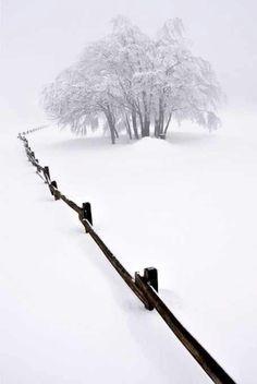 Snow fenceline