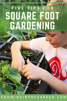 526 Best Square Foot Gardening Images Square Foot Gardening