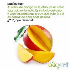 Esta semana será dedicada a una deliciosa fruta tropical: El Mango. ¿Que deseo le pedirías al árbol de mango?
