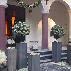 Fleurs trikala Pedestal, Greece, Garden, Flowers, Greece Country, Garten, Lawn And Garden, Gardens, Gardening