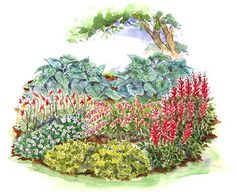 Brilliant Shade Garden Why not add a splash of color to a shady spot in your yard? This garden is perfect for it. The show starts in spring with bleeding heart and goes into summer with bold red astilbe. A perennial geranium blooms throughout Flower Garden, Garden Design, Bleeding Heart, Plants, Shade Garden, Small Garden Plans, Perennials, Beauty Gardens, Garden Planning