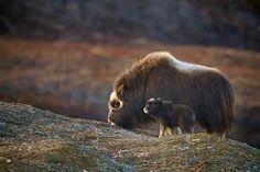 """Résultat de recherche d'images pour """"amour maternel chez les animaux"""""""