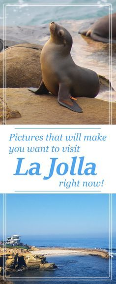 La Jolla, California is a perfect place for a luxuriuos, relaxing, beautiful, family vacation! #LaJolla #California #familytravel