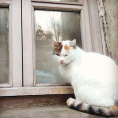 cat and windows