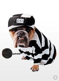 Hinter Gittern. #hunde #dogsplaces