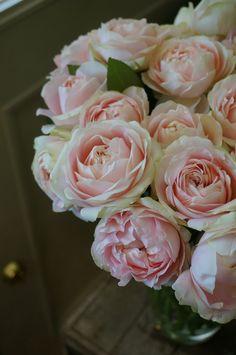 rose Moko-moko