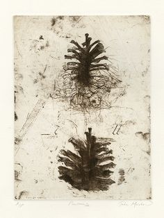 Jake Muirhead Pinecones 2014 Softground etching and drypoint Intaglio Printmaking, Drypoint Etching, Etching Prints, Botanical Drawings, Encaustic Painting, Wood Engraving, Pine Cones, Graphic Art, Illustration Art