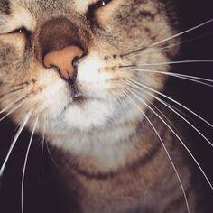 cat Cats, Animals, Gatos, Animais, Animales, Animaux, Animal, Kitty, Serval Cats