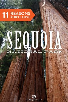 Sequoia National Park is one of America's most incredible national parks. Here are 11 reasons why you simply MUST visit!