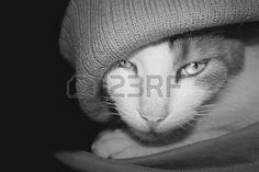 Cat with woolen hat