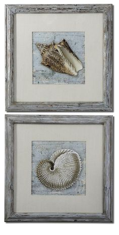 Weathered Shells Framed Art Set of 2 - Whats New?