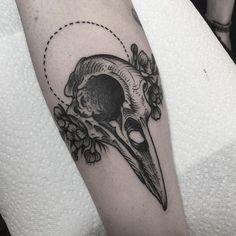 Resultado de imagen para bird skull illustration