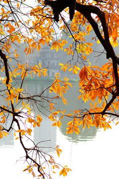 Hanoi autumn is  the most beautiful time of year, always romantic, poetic