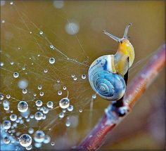 snail tangling in spider web