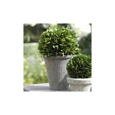 Found it at Wayfair - Boxwood Ball Topiary Floor Plant in Pot