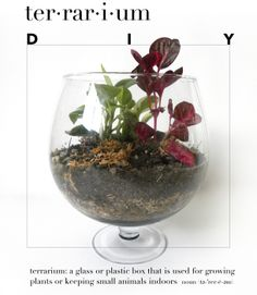 Easy DIY Terrarium by kraft&mint