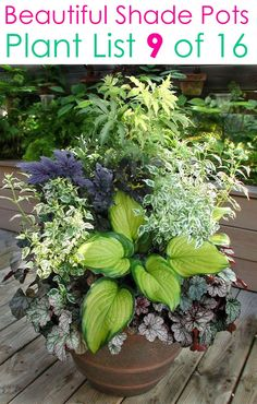 Shade Plants Container, Shade Garden Plants, Container Gardening Vegetables, Container Flowers, Garden Planters, House Plants, Shaded Garden, Flowering Plants, Planting Vegetables